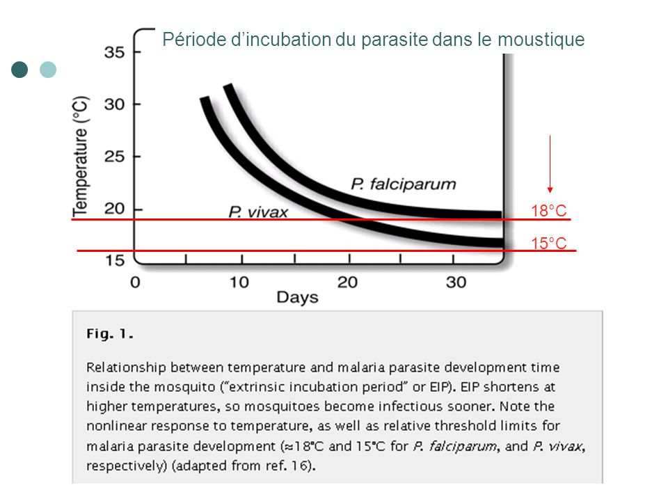 23 18°C 15°C Période dincubation du parasite dans le moustique
