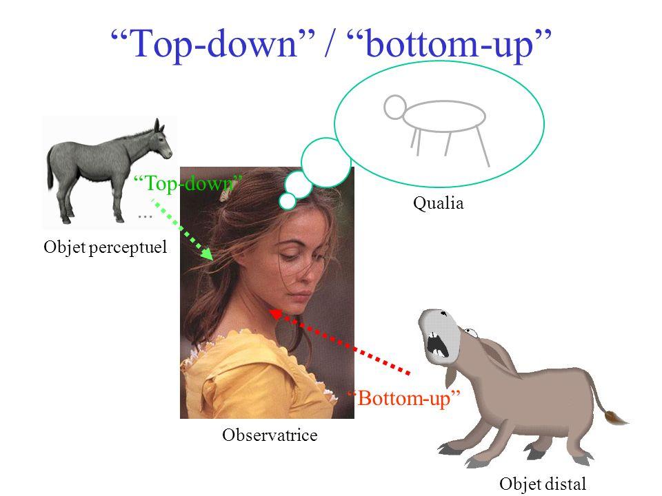 Objet distal Qualia... Objet perceptuel Observatrice Top-down / bottom-up Bottom-up Top-down