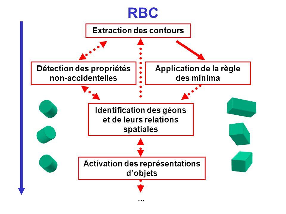 Extraction des contours Application de la règle des minima Activation des représentations dobjets RBC Détection des propriétés non-accidentelles Ident