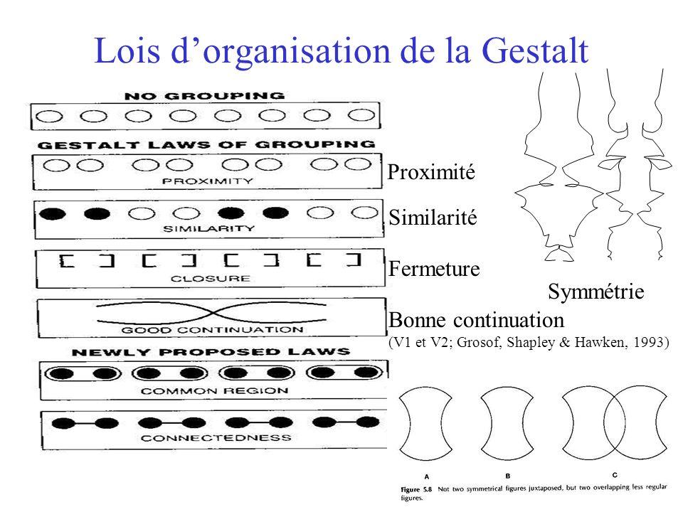 Lois dorganisation de la Gestalt Symmétrie Proximité Similarité Fermeture Bonne continuation (V1 et V2; Grosof, Shapley & Hawken, 1993)