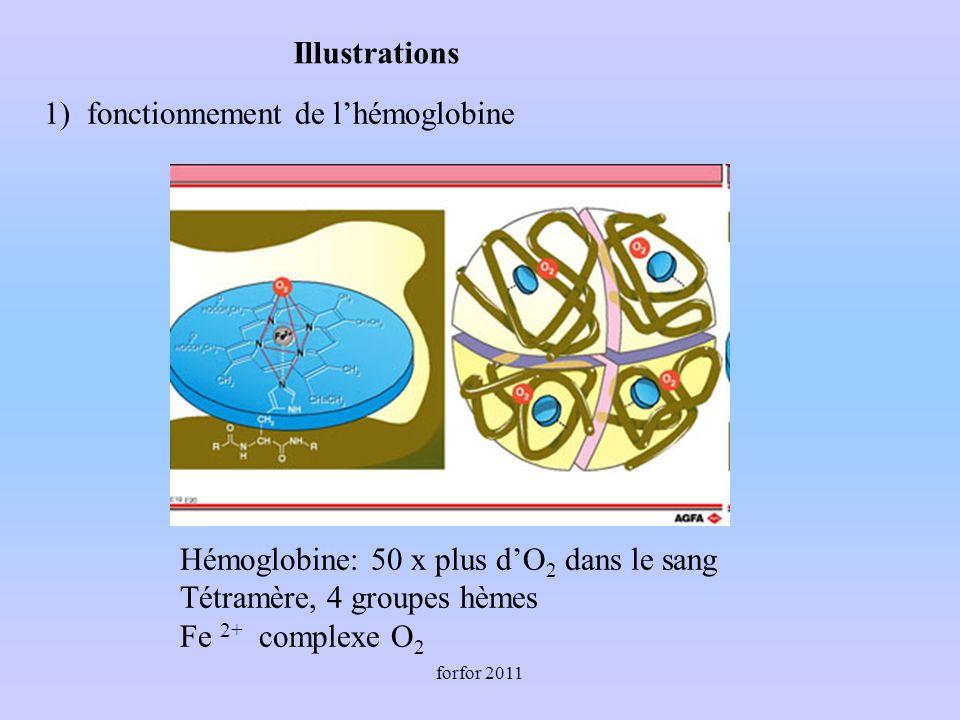 forfor 2011 1) fonctionnement de lhémoglobine Hémoglobine: 50 x plus dO 2 dans le sang Tétramère, 4 groupes hèmes Fe 2+ complexe O 2 Illustrations