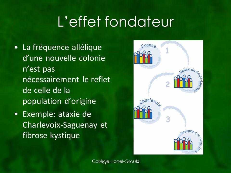 Leffet fondateur La fréquence allélique dune nouvelle colonie nest pas nécessairement le reflet de celle de la population dorigine Exemple: ataxie de Charlevoix-Saguenay et fibrose kystique Collège Lionel-Groulx