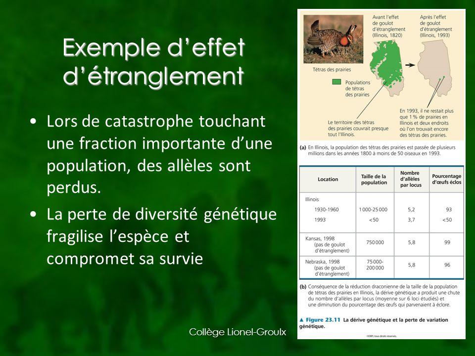Exemple deffet détranglement Lors de catastrophe touchant une fraction importante dune population, des allèles sont perdus.