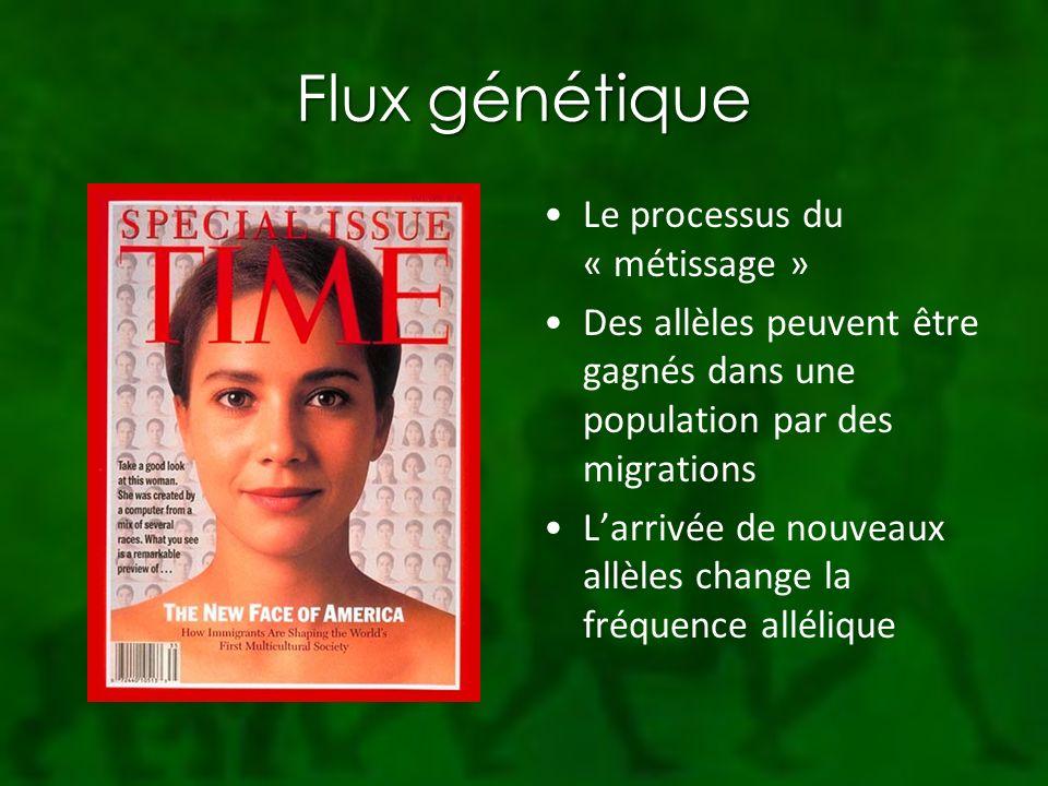 Flux génétique Le processus du « métissage » Des allèles peuvent être gagnés dans une population par des migrations Larrivée de nouveaux allèles change la fréquence allélique