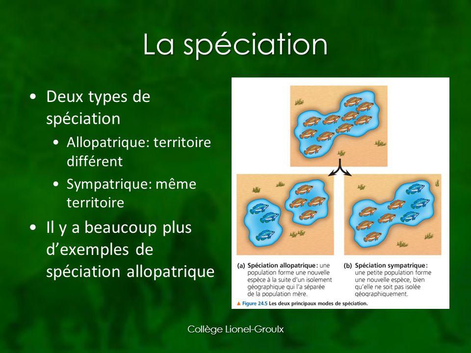 La spéciation Deux types de spéciation Allopatrique: territoire différent Sympatrique: même territoire Il y a beaucoup plus dexemples de spéciation allopatrique Collège Lionel-Groulx