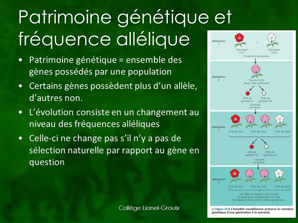 Patrimoine génétique et fréquence allélique Patrimoine génétique = ensemble des gènes possédés par une population Certains gènes possèdent plus dun allèle, dautres non.