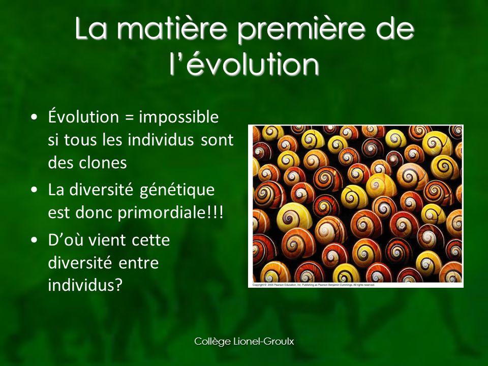 La matière première de lévolution Évolution = impossible si tous les individus sont des clones La diversité génétique est donc primordiale!!.