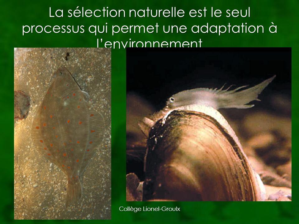 La nature est tellement parfaite que lévolution par la sélection naturelle ne peut pas agir sans force extérieure Est-ce vraiment le cas.