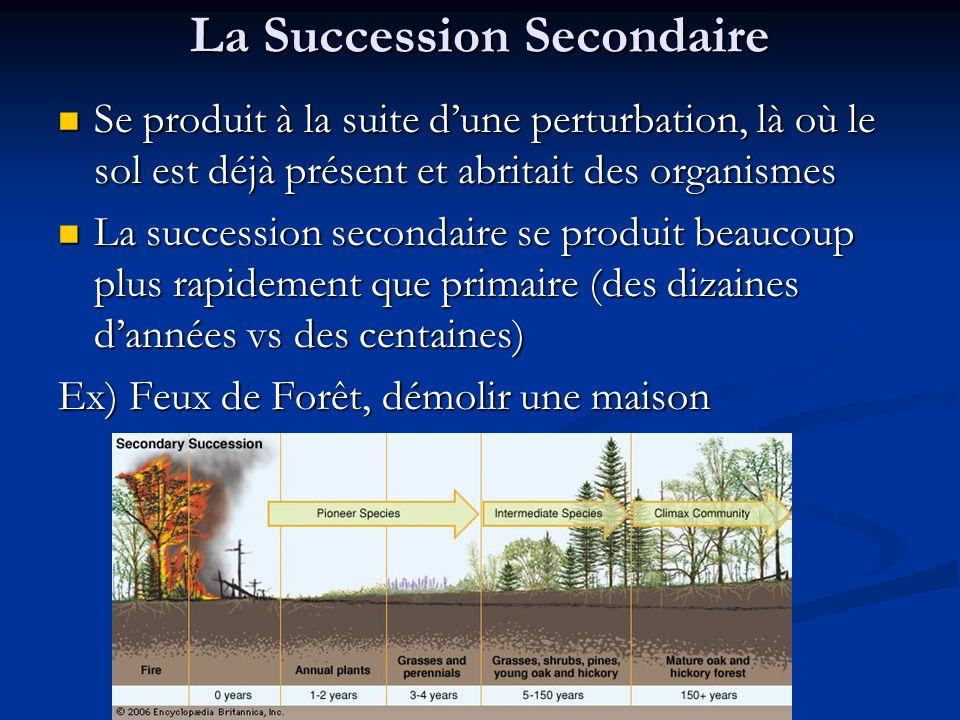 La Succession Secondaire Se produit à la suite dune perturbation, là où le sol est déjà présent et abritait des organismes Se produit à la suite dune
