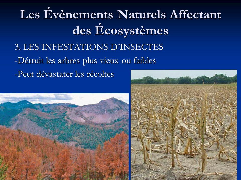 Les Évènements Naturels Affectant des Écosystèmes 3. LES INFESTATIONS DINSECTES -Détruit les arbres plus vieux ou faibles -Peut dévastater les récolte