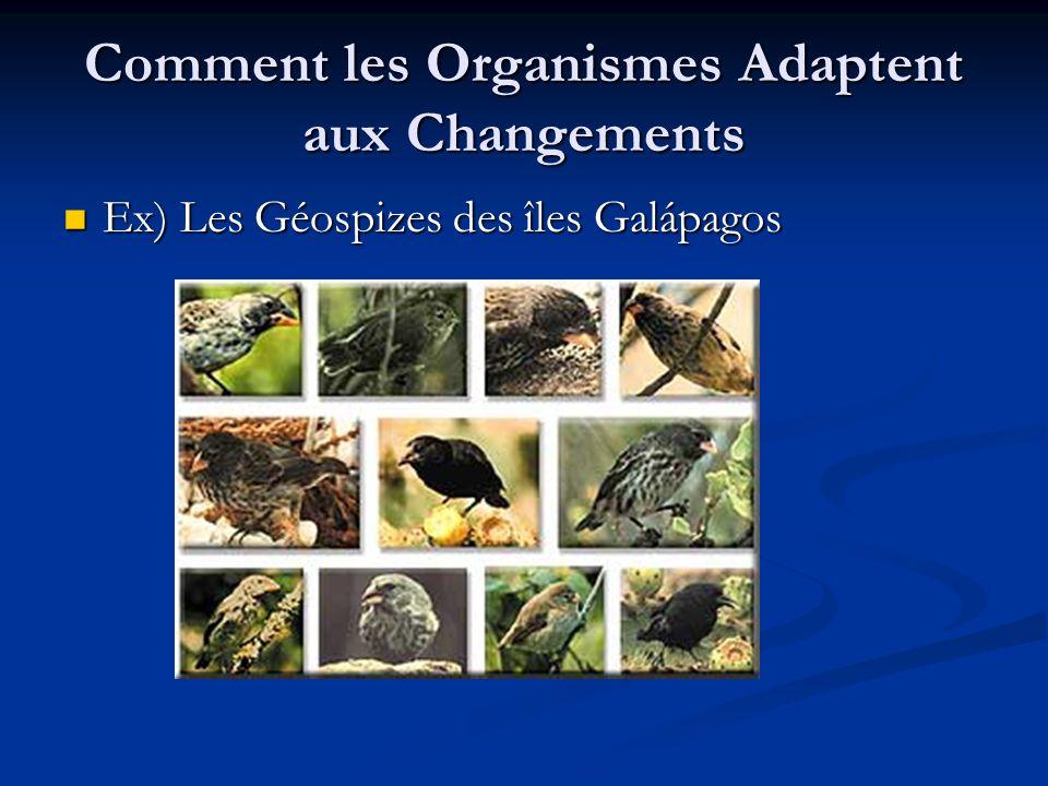 Comment les Organismes Adaptent aux Changements Ex) Les Géospizes des îles Galápagos Ex) Les Géospizes des îles Galápagos