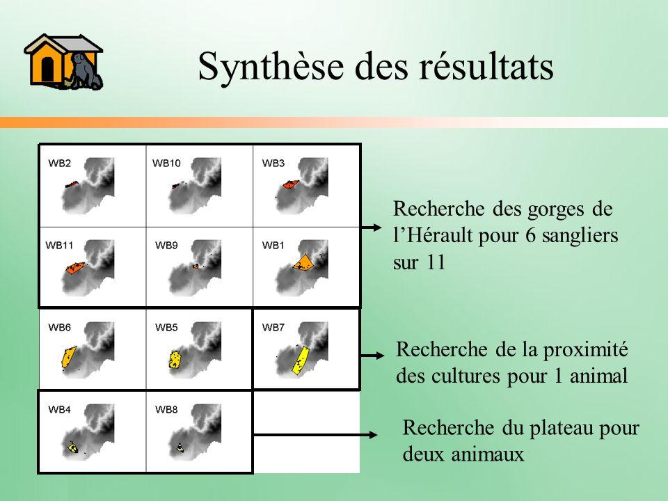 Synthèse des résultats Recherche des gorges de lHérault pour 6 sangliers sur 11 Recherche du plateau pour deux animaux Recherche de la proximité des c