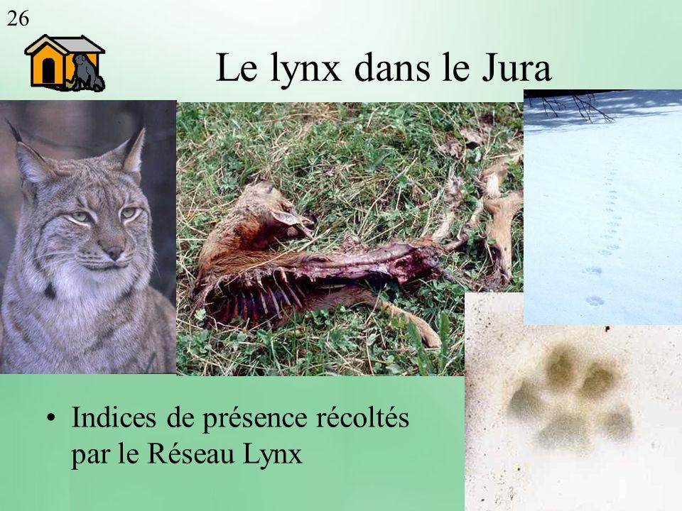 Le lynx dans le Jura Indices de présence récoltés par le Réseau Lynx 26 Population de lynx potentiellement 200 adultes