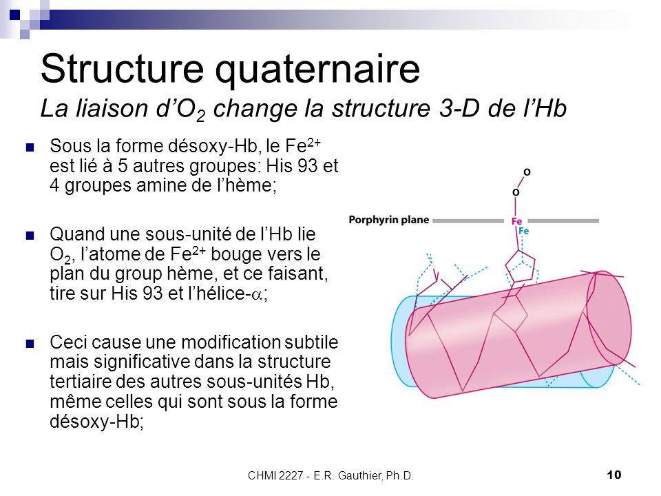 CHMI 2227 - E.R. Gauthier, Ph.D. 10 Structure quaternaire La liaison dO 2 change la structure 3-D de lHb Sous la forme désoxy-Hb, le Fe 2+ est lié à 5