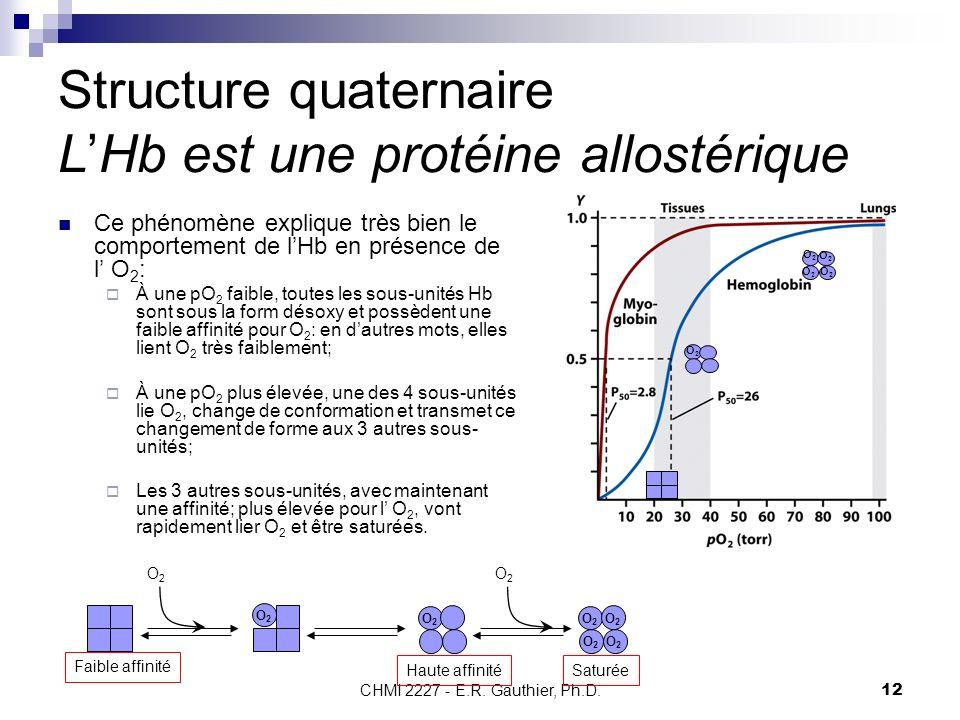 CHMI 2227 - E.R. Gauthier, Ph.D. 12 Structure quaternaire LHb est une protéine allostérique Ce phénomène explique très bien le comportement de lHb en