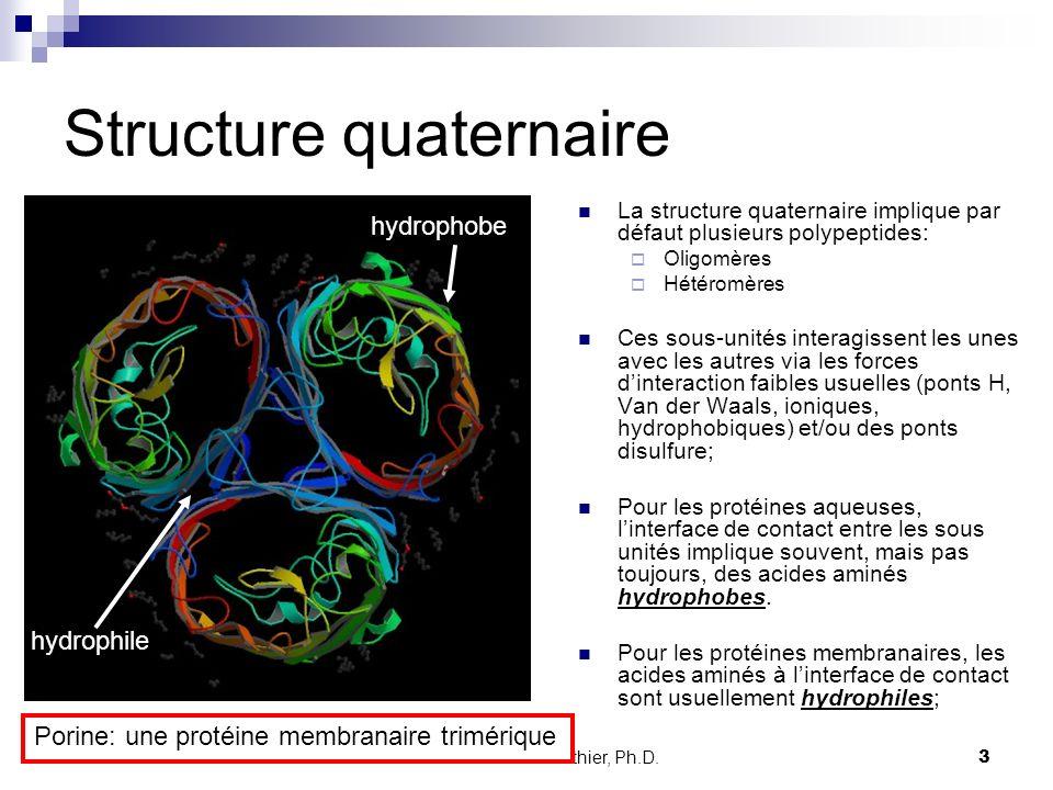 CHMI 2227 - E.R. Gauthier, Ph.D. 3 Structure quaternaire La structure quaternaire implique par défaut plusieurs polypeptides: Oligomères Hétéromères C