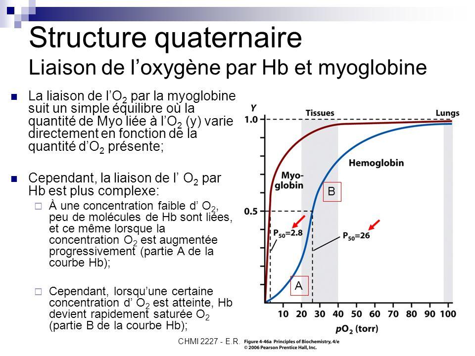 CHMI 2227 - E.R. Gauthier, Ph.D. 8 Structure quaternaire Liaison de loxygène par Hb et myoglobine A B La liaison de lO 2 par la myoglobine suit un sim