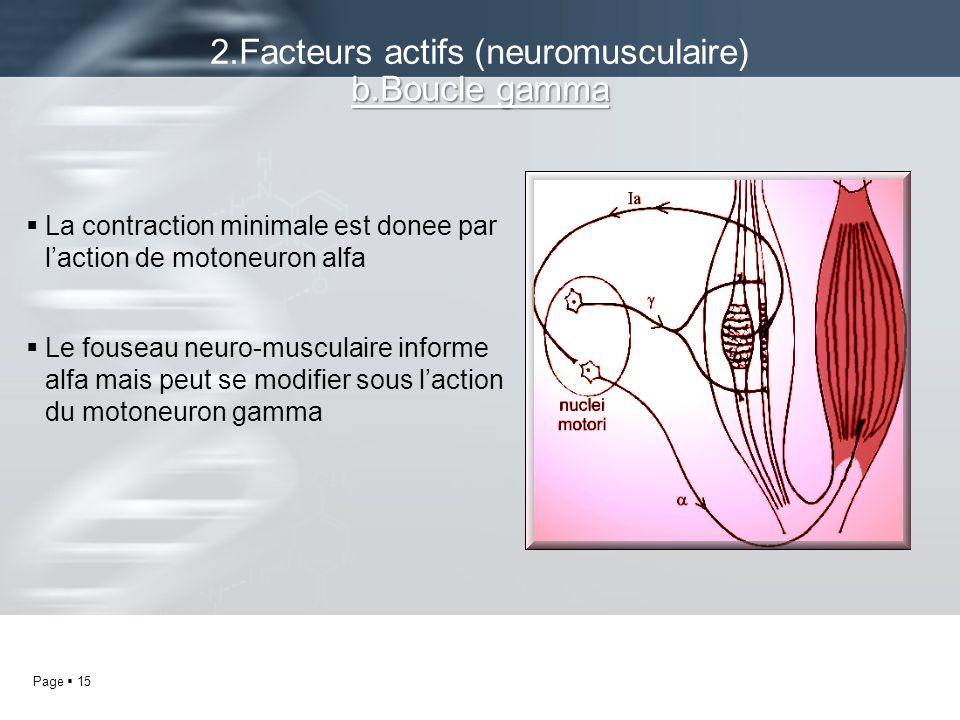 Page 15 La contraction minimale est donee par laction de motoneuron alfa Le fouseau neuro-musculaire informe alfa mais peut se modifier sous laction d