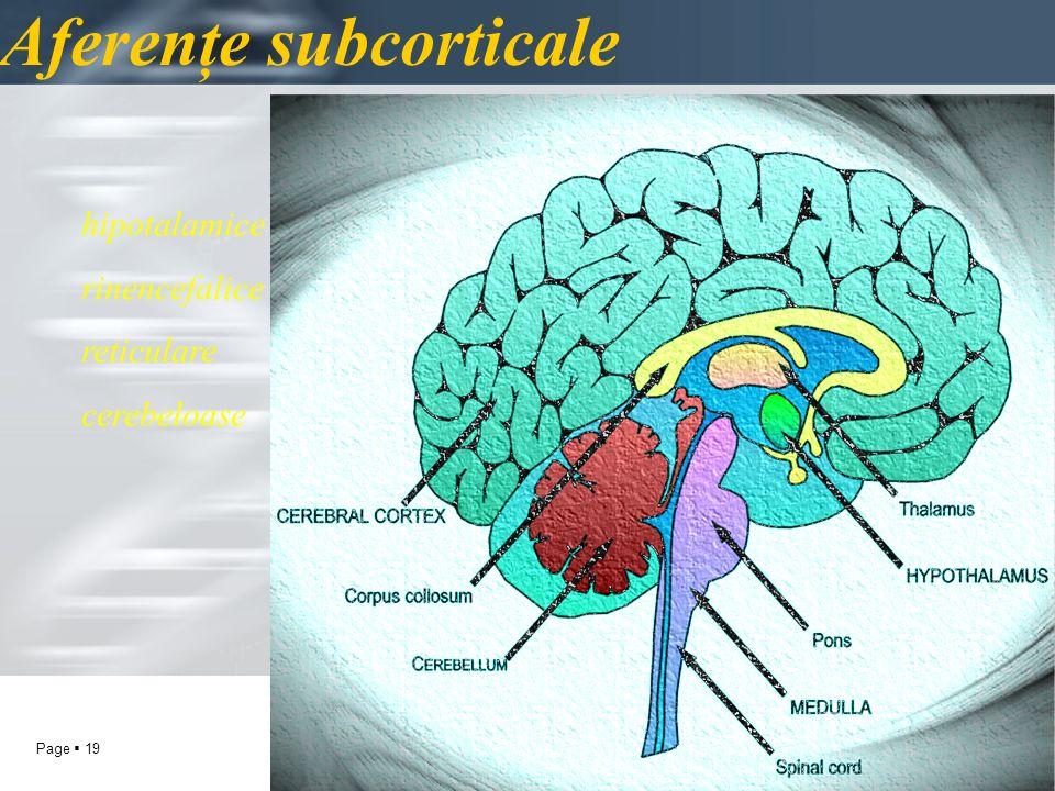 Page 19 Aferenţe subcorticale hipotalamice rinencefalice reticulare cerebeloase