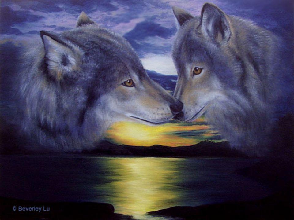 Le garçon regarda Attentivement son grand-père Dans les yeux et demanda: Lequel des deux loups L emporte, grand-père.