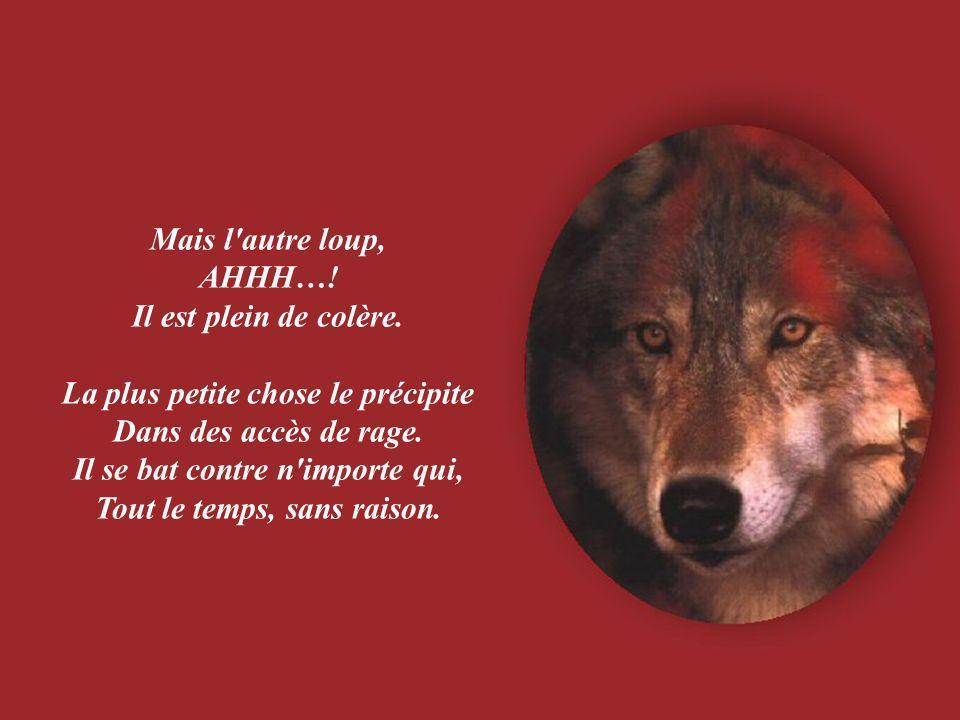 Mais l autre loup, AHHH….Il est plein de colère.