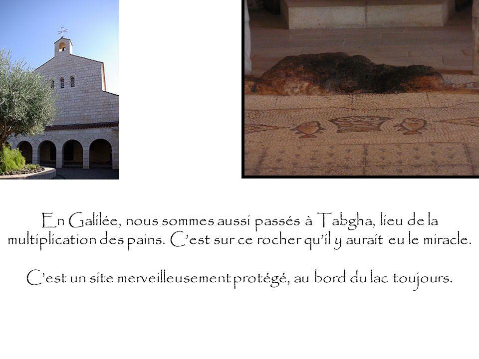 En Galilée, nous sommes aussi passés à Tabgha, lieu de la multiplication des pains. Cest sur ce rocher quil y aurait eu le miracle. Cest un site merve