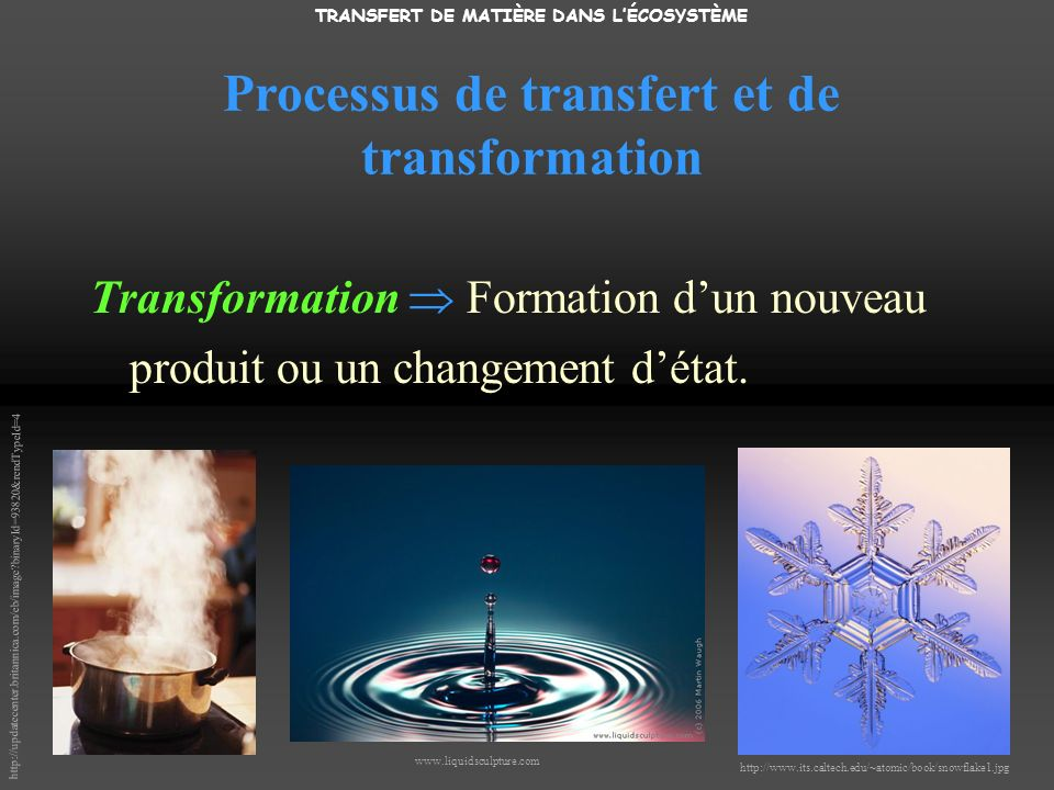 TRANSFERT DE MATIÈRE DANS LÉCOSYSTÈME Transformation Formation dun nouveau produit ou un changement détat. www.liquidsculpture.com http://updatecenter