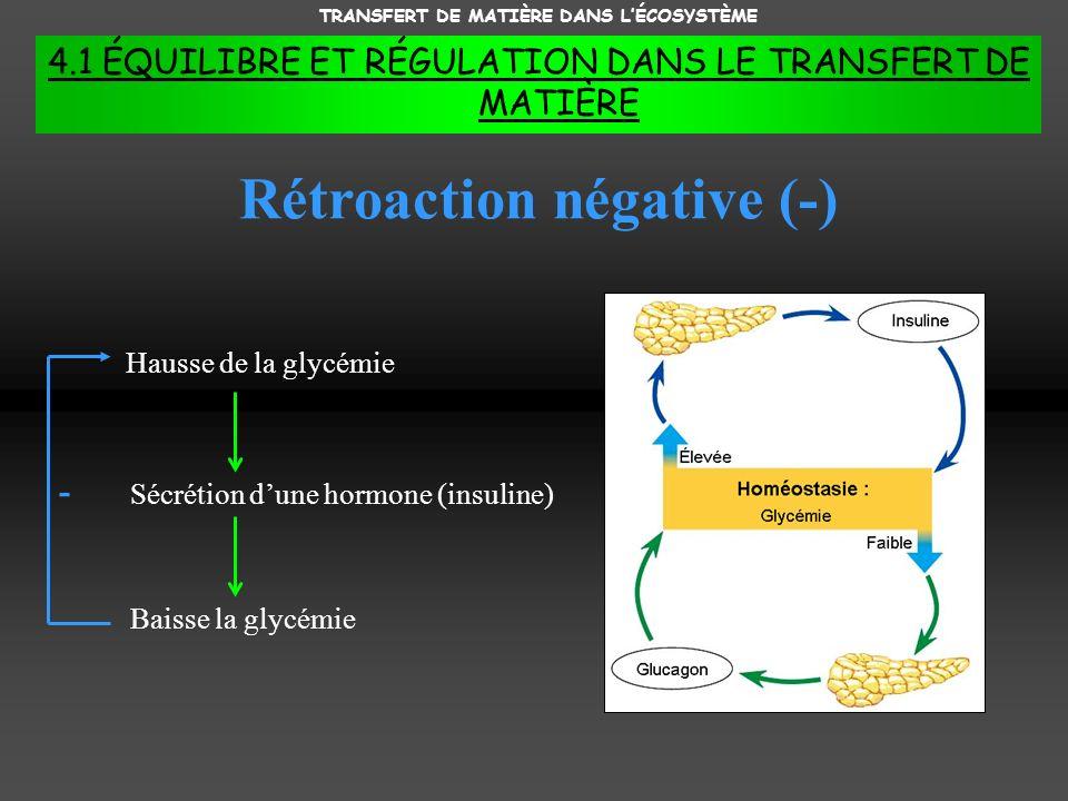 TRANSFERT DE MATIÈRE DANS LÉCOSYSTÈME 4.1 ÉQUILIBRE ET RÉGULATION DANS LE TRANSFERT DE MATIÈRE Rétroaction négative (-) Hausse de la glycémie Sécrétion dune hormone (insuline) Baisse la glycémie -