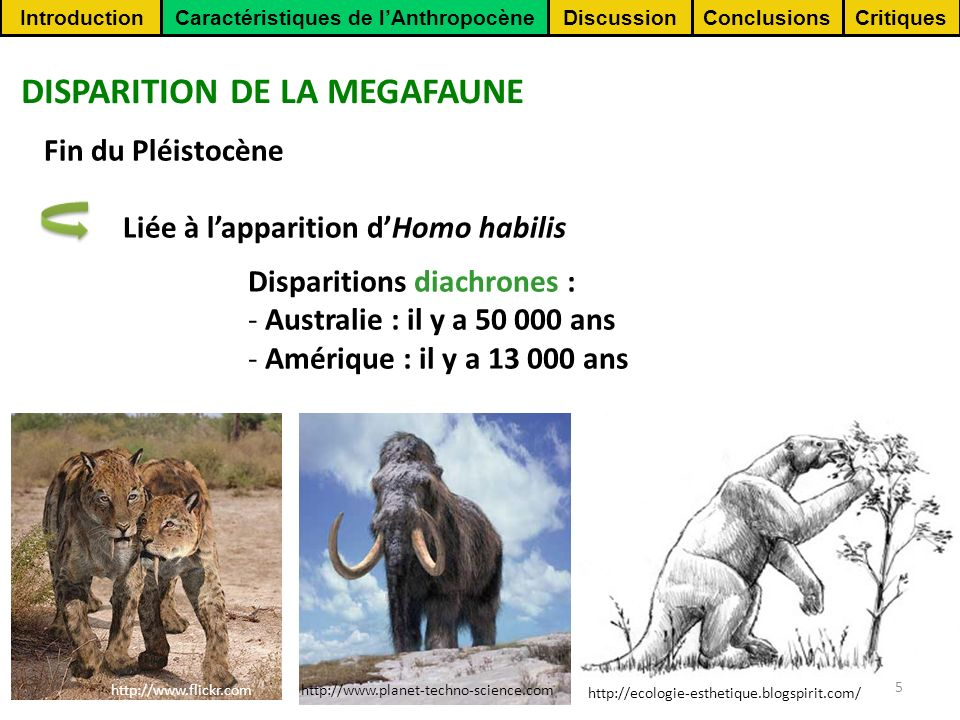 ConclusionsCritiquesDiscussionIntroductionCaractéristiques de lAnthropocène 5 http://www.flickr.com http://www.planet-techno-science.com http://ecologie-esthetique.blogspirit.com/ DISPARITION DE LA MEGAFAUNE Fin du Pléistocène Liée à lapparition dHomo habilis Disparitions diachrones : - Australie : il y a 50 000 ans - Amérique : il y a 13 000 ans