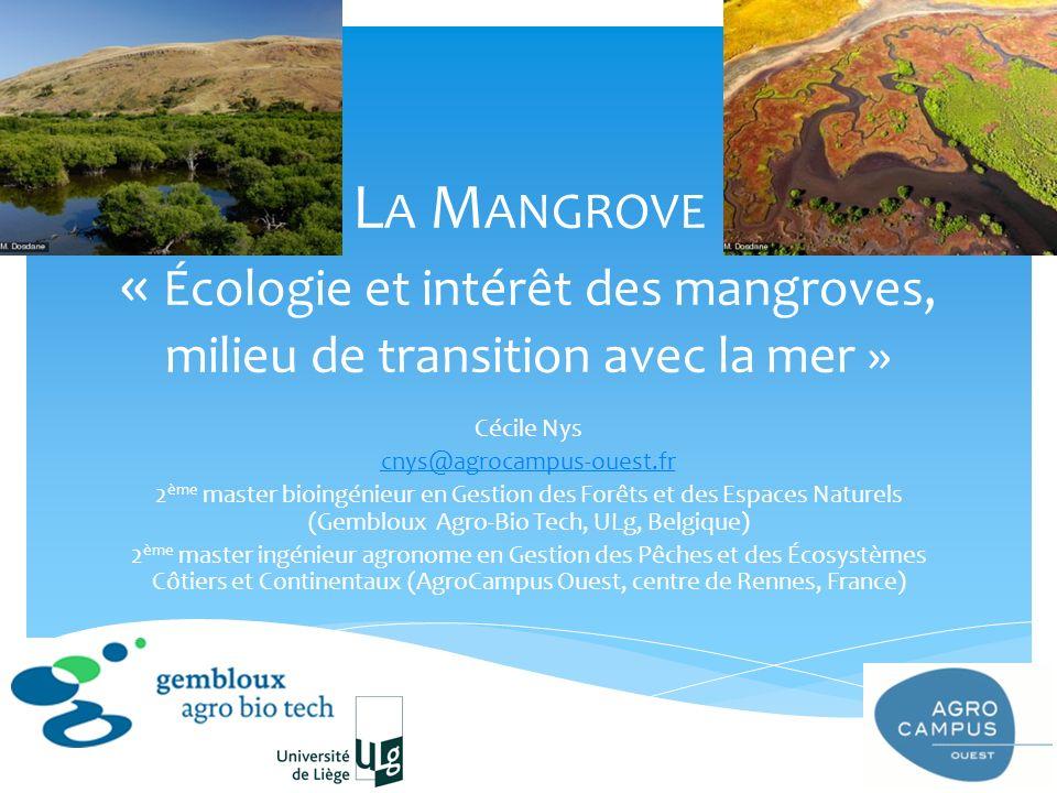 L A M ANGROVE « Écologie et intérêt des mangroves, milieu de transition avec la mer » Cécile Nys cnys@agrocampus-ouest.fr 2 ème master bioingénieur en