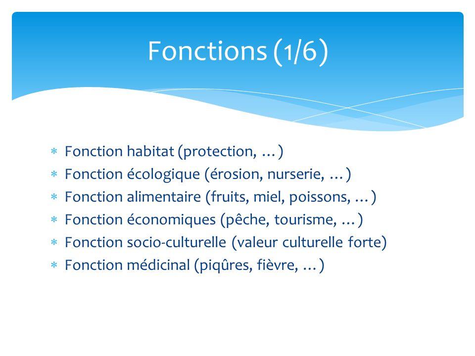 Fonction habitat (protection, …) Fonction écologique (érosion, nurserie, …) Fonction alimentaire (fruits, miel, poissons, …) Fonction économiques (pêc