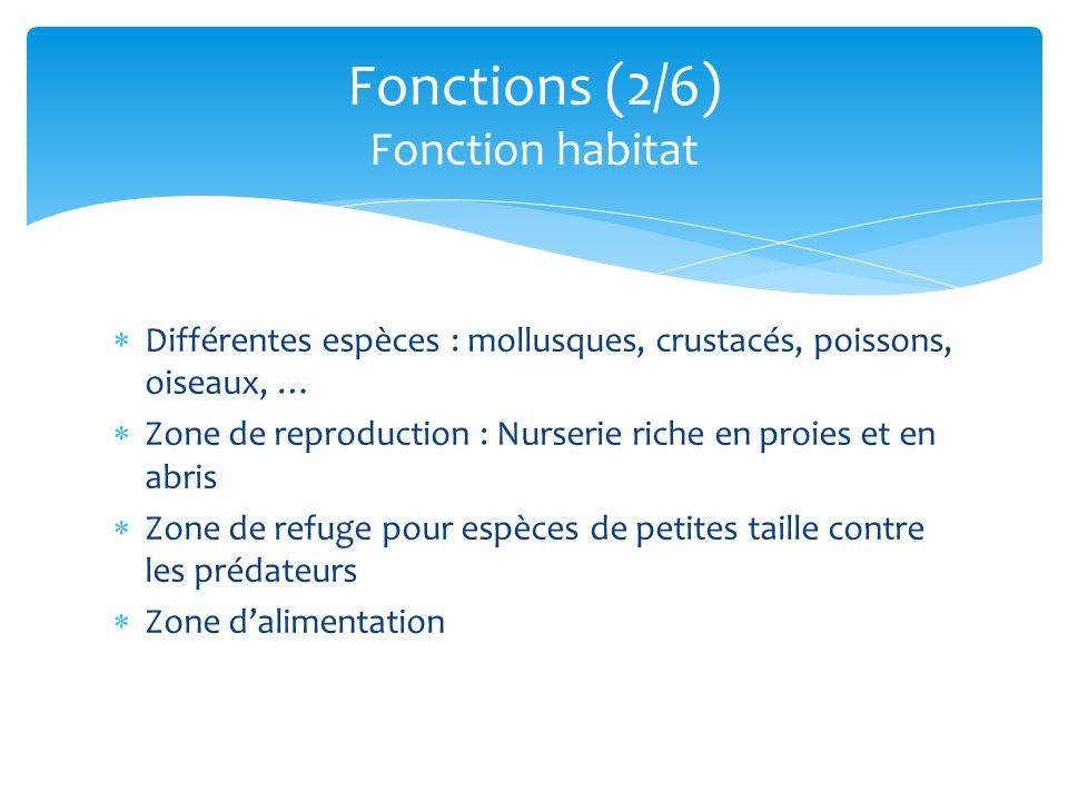Reproduction (Nurserie), protection contre les prédateurs Protéger le littoral de lérosion marine, éolienne, tsunami (2004), cyclones Purifier les eaux venant de la terre amélioration qualité de leau par filtration barrière physique pour les coraux Faire progresser les terres sur les mers Purifier lair (forêt) Régulation du climat (captage de CO2) Enrichissement des eaux du lagon en sels minéraux développement récifs coralliens et herbiers Insectes pollinisateurs Fonctions (3/6) Fonction écologique