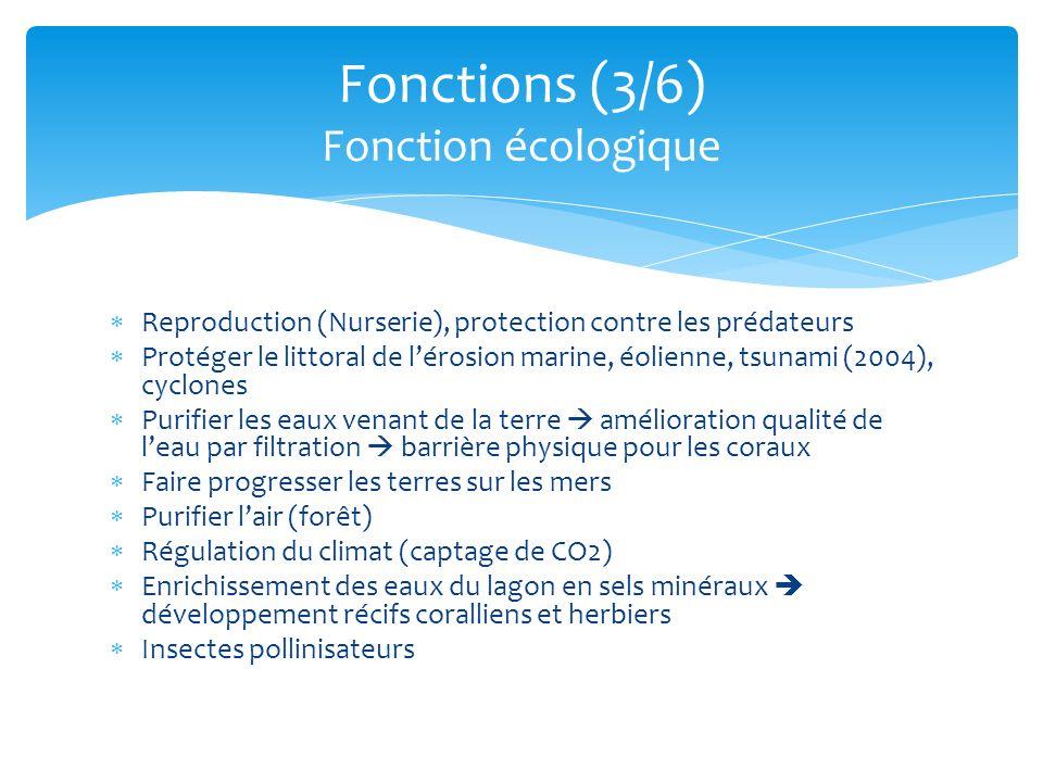 Reproduction (Nurserie), protection contre les prédateurs Protéger le littoral de lérosion marine, éolienne, tsunami (2004), cyclones Purifier les eau