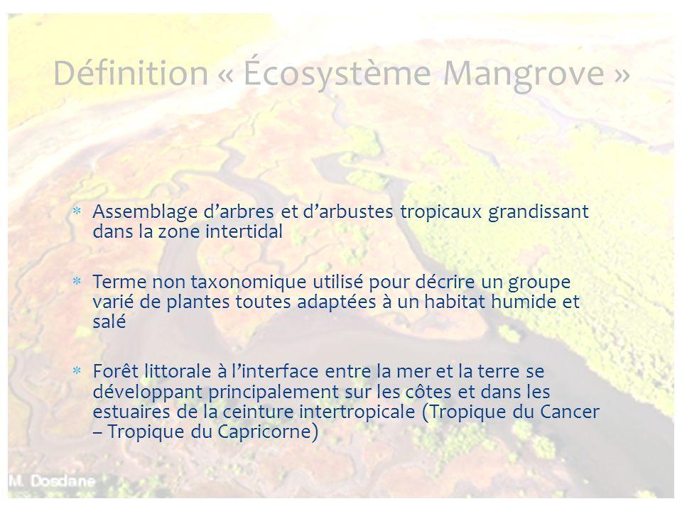 Assemblage darbres et darbustes tropicaux grandissant dans la zone intertidal Terme non taxonomique utilisé pour décrire un groupe varié de plantes to