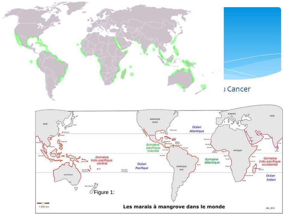 Surface : 75 % des côtes tropicales et subtropicales ~ 17 millions ha (en 2000) 15,2 millions ha (en 2005, FAO) Nombre de continents : 4 Répartition : 3 zones Atlantique occidental : 49% mangroves mondial Afrique : 19% mangroves mondial Atlantique central : 14% mangroves mondial Océan indien : 37% mangroves mondial Nombre de pays : 112 50 % des surfaces dans 5 pays : Indonésie, Australie, Brésil, Nigéria & Mexique Chiffres 1% forêts tropicales