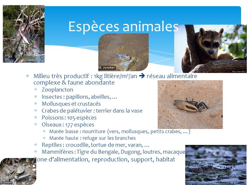 Milieu très productif : 1kg litière/m²/an réseau alimentaire complexe & faune abondante Zooplancton Insectes : papillons, abeilles, … Mollusques et cr