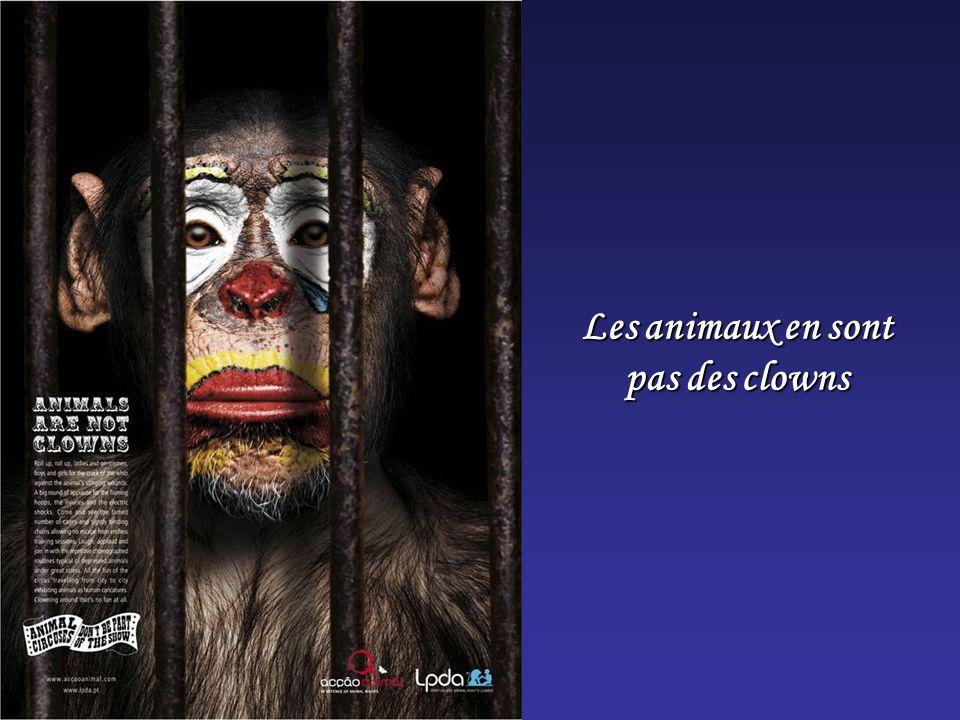 Les animaux en sont pas des clowns