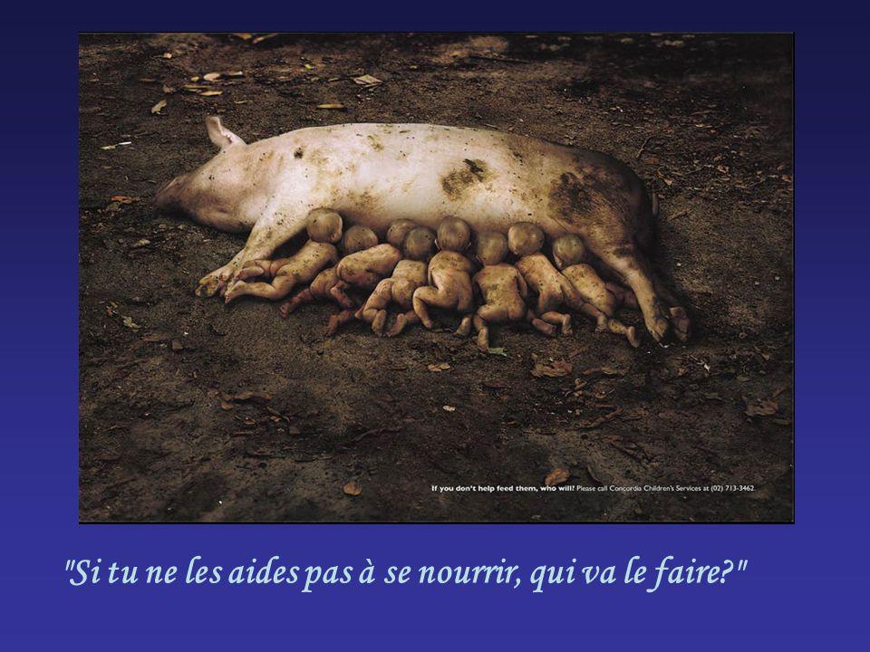 Si tu ne les aides pas à se nourrir, qui va le faire?