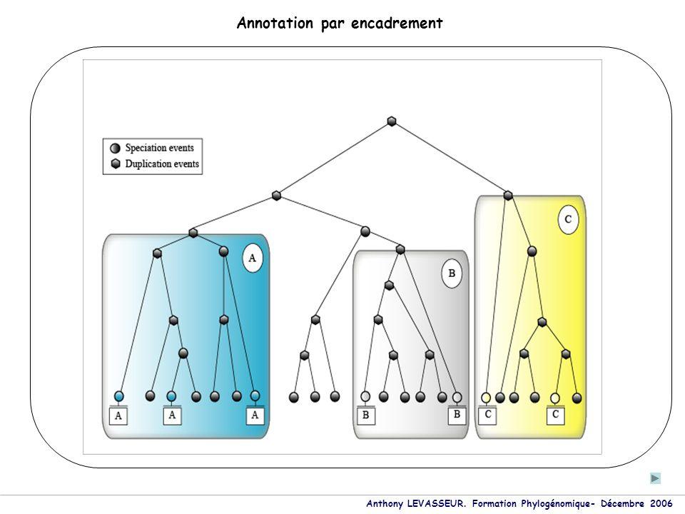 Anthony LEVASSEUR. Formation Phylogénomique- Décembre 2006 Annotation par encadrement