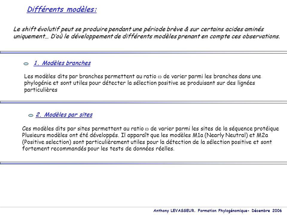 Anthony LEVASSEUR. Formation Phylogénomique- Décembre 2006 Différents modèles: 1. Modèles branches Les modèles dits par branches permettent au ratio ω