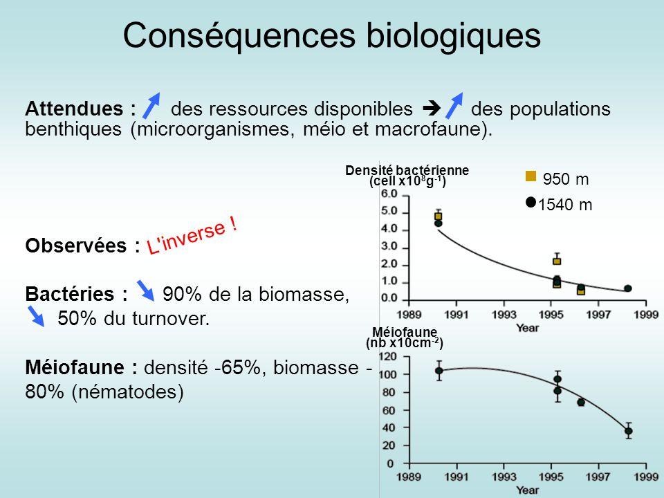 Conséquences biologiques Hypothèses : 1.Impact direct de la baisse de température (effet négatif sur le métabolisme (Danovaro et al., 2004)) 2.Impact direct du changement brutal de température (Organismes adaptés à des conditions stables pendant une longue période).