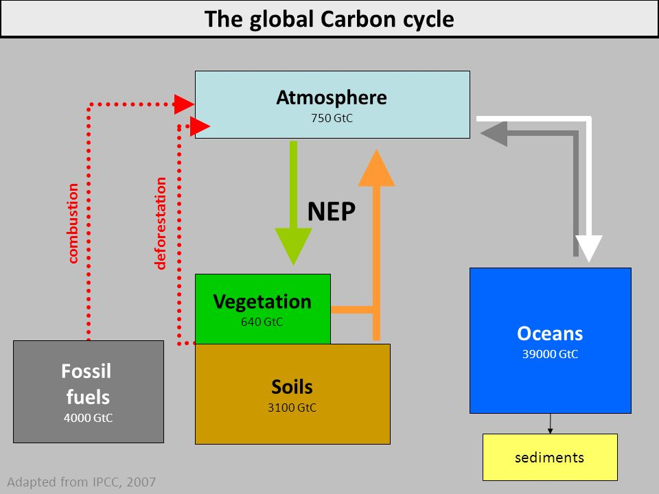 Atmosphere 750 GtC sediments Adapted from IPCC, 2007 Fossil fuels 4000 GtC Oceans 39000 GtC NEP The global Carbon cycle combustion deforestation Veget