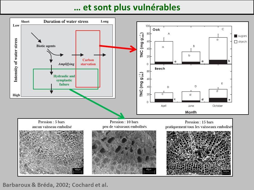 … et sont plus vulnérables Barbaroux & Bréda, 2002; Cochard et al.