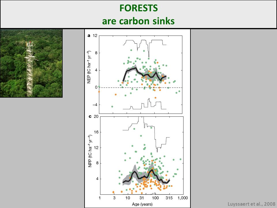 Luyssaert et al., 2008 FORESTS are carbon sinks