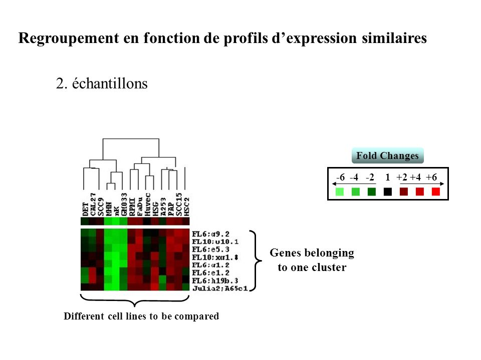 Different cell lines to be compared Genes belonging to one cluster Fold Changes 1-2-4-6+6+4+2 Regroupement en fonction de profils dexpression similair