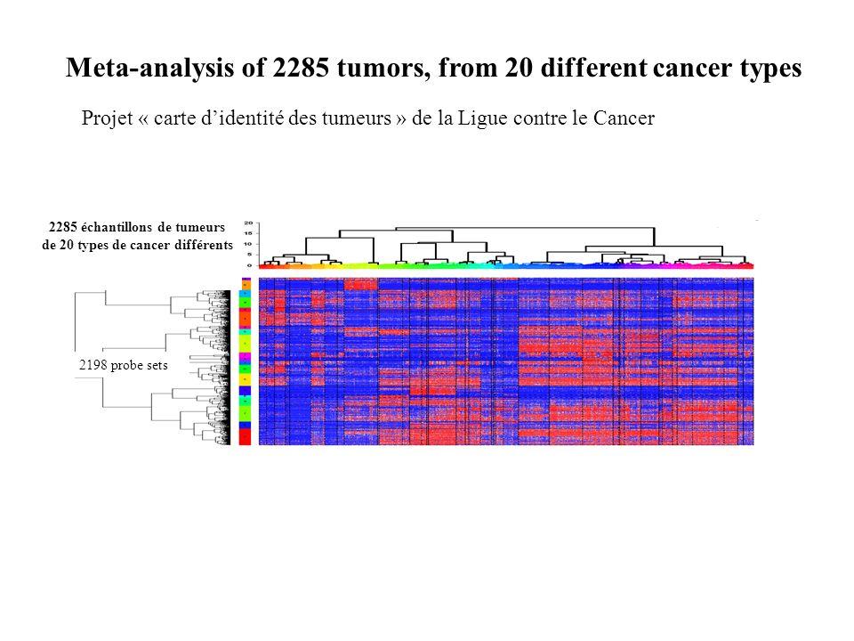 2285 échantillons de tumeurs de 20 types de cancer différents 2198 probe sets Meta-analysis of 2285 tumors, from 20 different cancer types Projet « ca