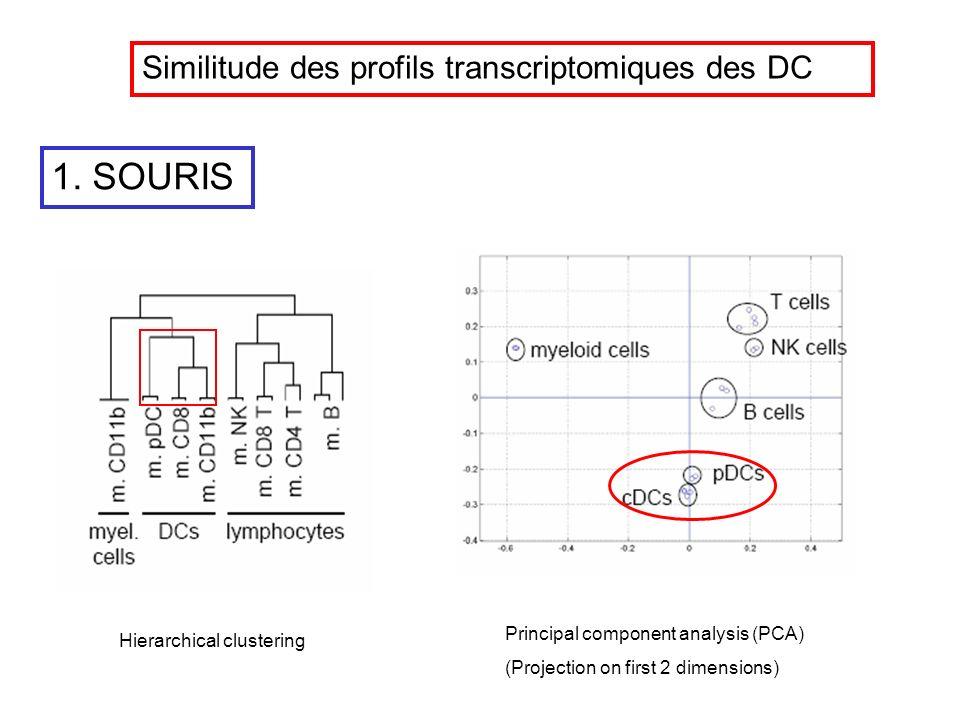 Hierarchical clustering Principal component analysis (PCA) (Projection on first 2 dimensions) 1. SOURIS Similitude des profils transcriptomiques des D