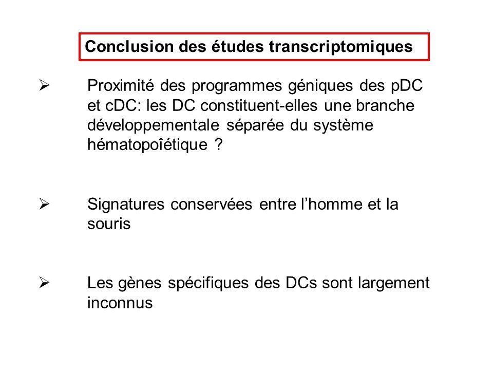 Conclusion des études transcriptomiques Proximité des programmes géniques des pDC et cDC: les DC constituent-elles une branche développementale séparé