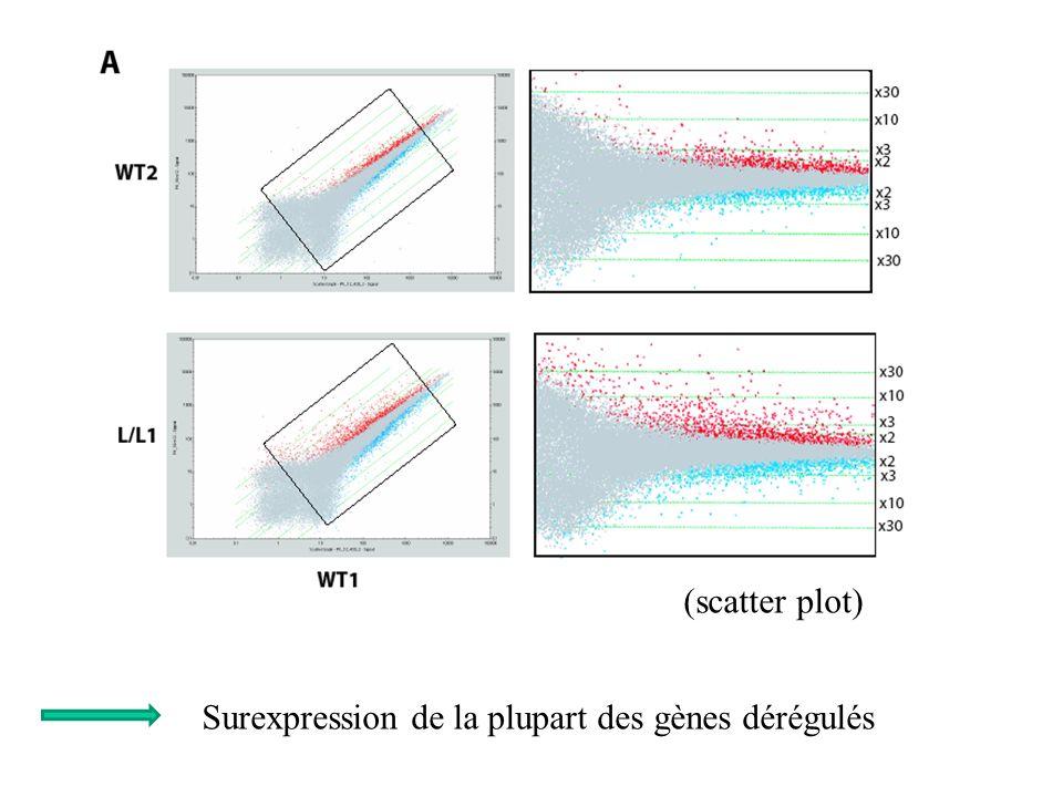 Surexpression de la plupart des gènes dérégulés (scatter plot)