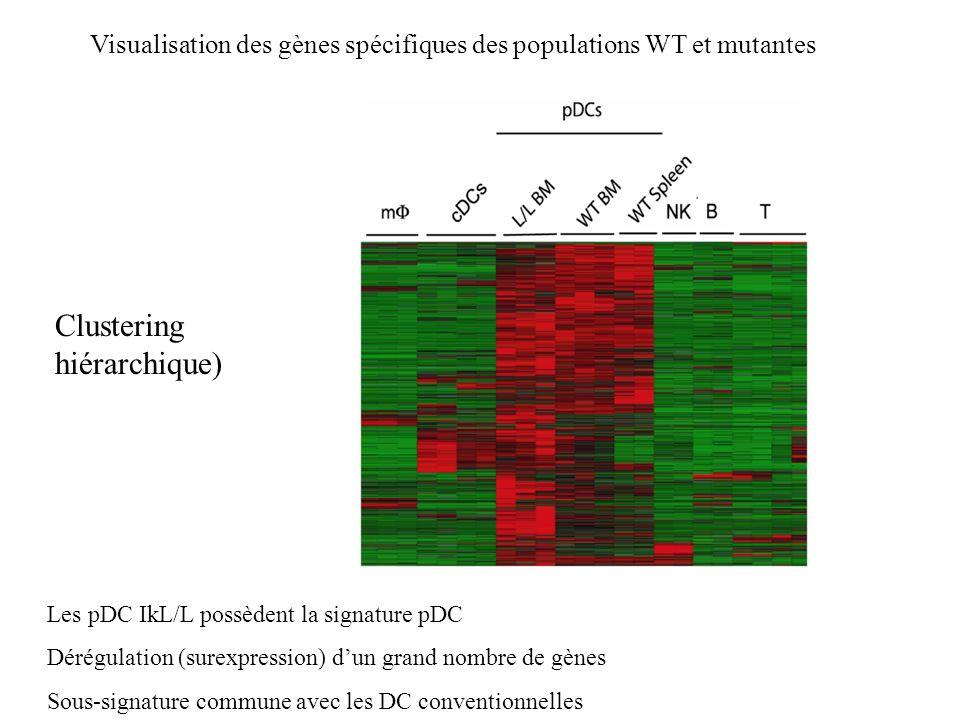 Les pDC IkL/L possèdent la signature pDC Dérégulation (surexpression) dun grand nombre de gènes Sous-signature commune avec les DC conventionnelles Vi